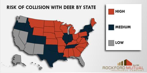 Deer-Collisions.jpg